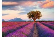 Ravensburger 1000 Teile Puzzles: Lavendelfeld in der...